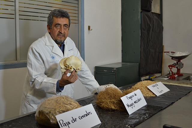 Impulsa la BUAP cultivo y consumo de hongo Pleurotus en zonas marginadas